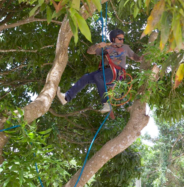Certified arboriculturist Clay Jones works in a St. Thomas tree. (Photo provided by Clay Jones)