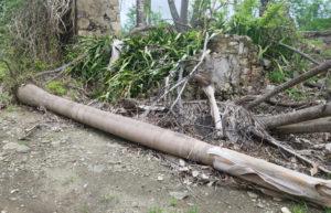 A destroyed palm tree at the St. George Village Botanical Garden. (Jamie Leonard photo)