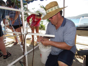 Tourists visiting St. Thomas volunteer to fashion coral 'trees' out of PVC. They will be planted in deep waters as part of a restoration project. (Photo provided by VI-EPSCoR)