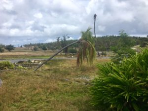 A bent palm tree shows the direction of the wind from Hurricane Irma when the storm struck the resort.