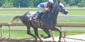 "St. Croix-born jockey Euclyn ""Pede"" Prentice Jr. rides Toll Guard at Belterra July 7. (Photo by Ricky Plaskett)"