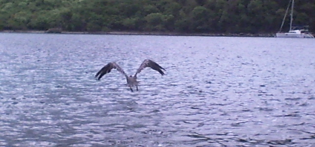 A bird takes off from Lameshur Bay. (Source file photo)