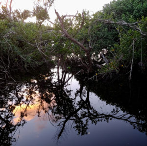 Magens Bay mangroves at sunset.