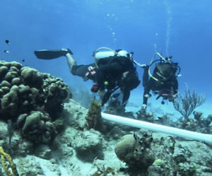 Divers install a structure called BUCA that will provide a platform on which to grow elkhorn coral in Cane Bay. (Photo provided by Dr. Ashlee Lillis)