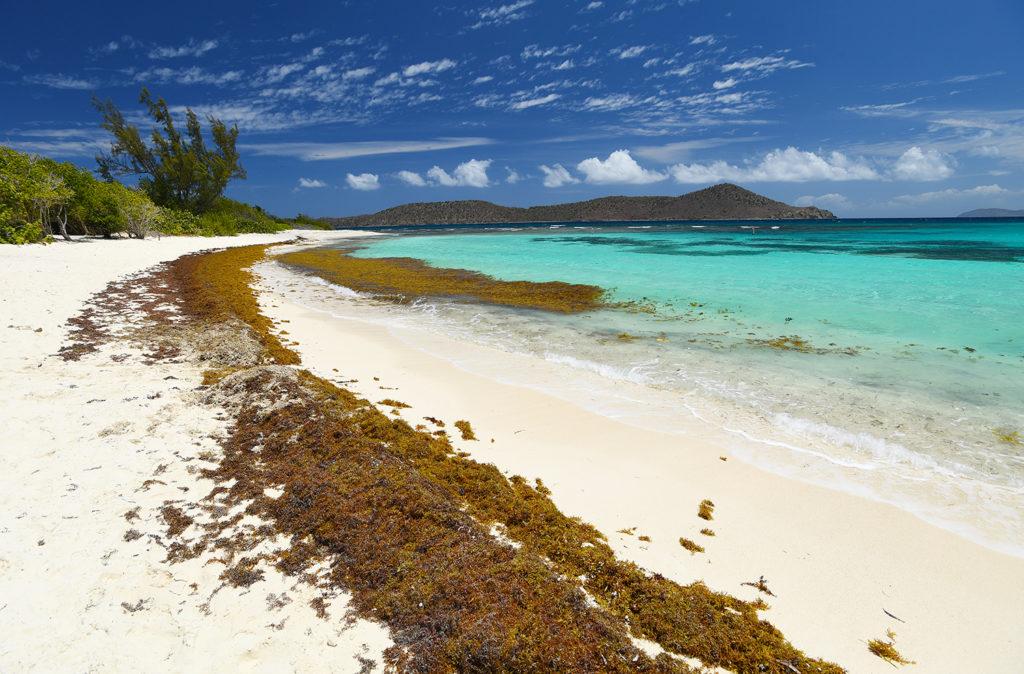 Spread of Sargassum Seaweed May be 'New Normal' | St  John