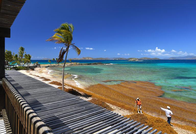 Sargassum: Brown Tide Threatens the Caribbean