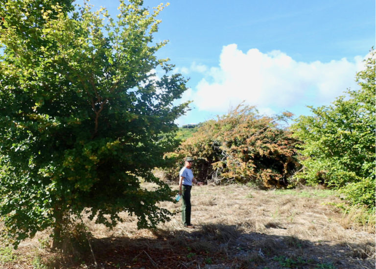 National Park Service Makes Progress Repopulating Native Plants