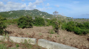 Native plants overshadow invasive species overlooking Triton and Mangrove Bays. (Source photo by Susan Ellis)