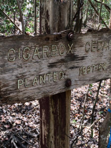 Remnant sign indicates the site of tree plantings from 1967-1968. (Photo by Grizelle González, USDA FS-IITF)