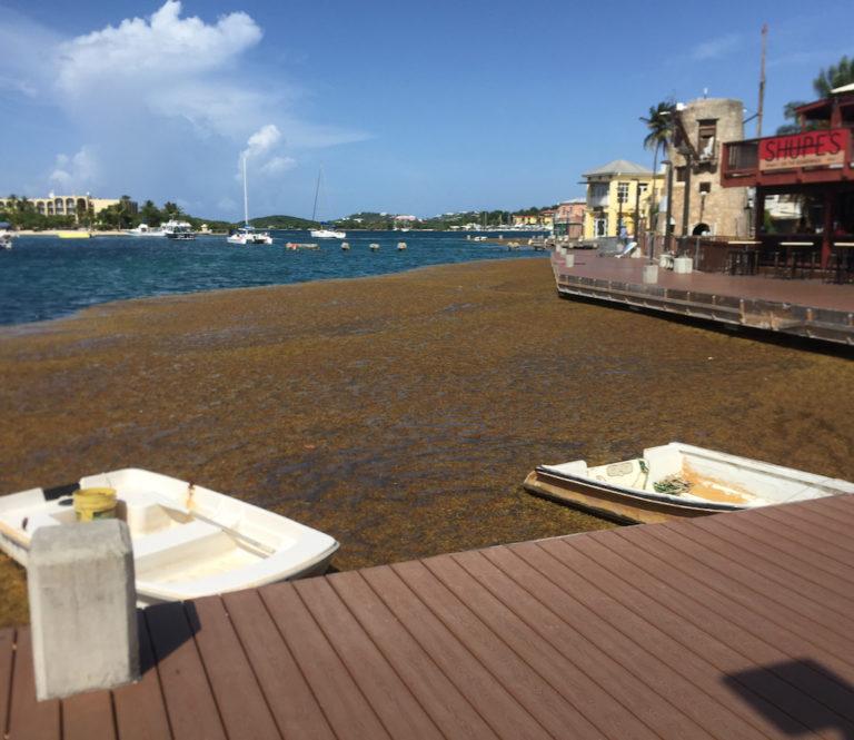 Islands Stagger Under Weight of Sargassum