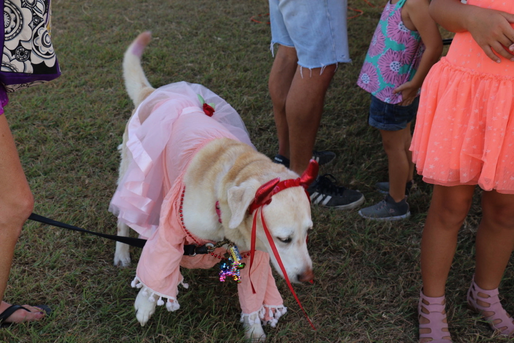 Ten year old Shelby is dressed for the day to the delight of many. (Source photo by Linda Morland)