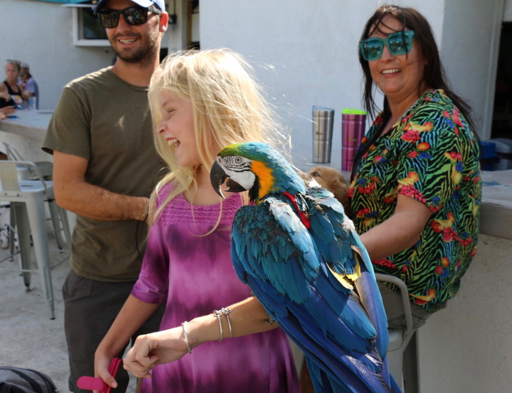 Haley Olson has a laugh as she holds a big parrot. The SCAWC treats all types of animals, not just dogs and cats. Mike Yearick and Sarah Klink, the bird's owners watch. (Source photo by Linda Morland)