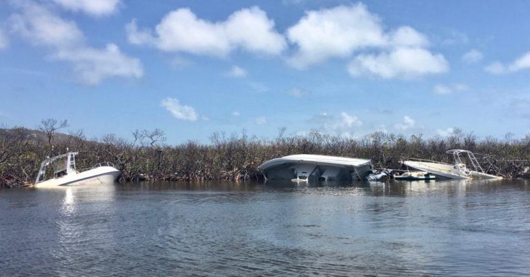 Volunteers Needed for STX Mangrove Cleanup on Saturday