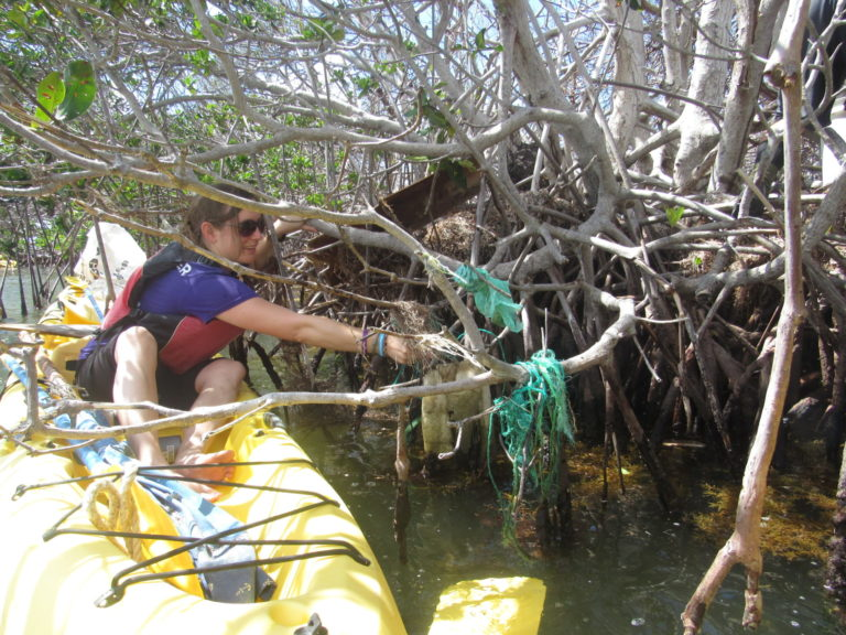 Volunteers Sought for Large-Scale Mangrove Cleanups on Each Island
