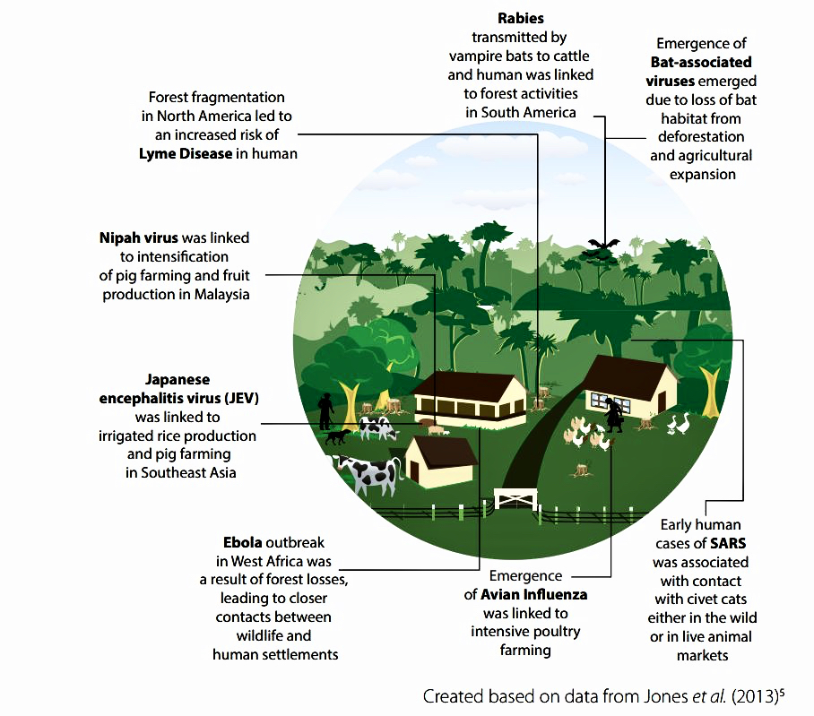 Graphic from UNEP (United Nations Environmental Programme) Report 2016
