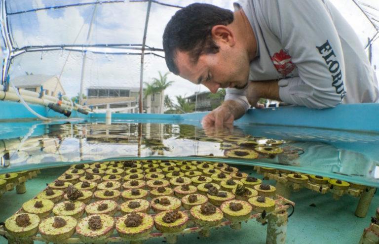 UVI Grad Student Testing New Techniques for Coral Restoration
