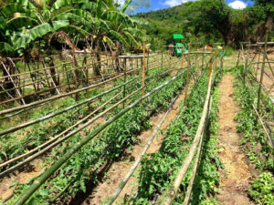 Neat lines of produce are planted at Ridge to Reef Farm. (Photo courtesy of Ridge to Reef Farm Director Nate Olive)