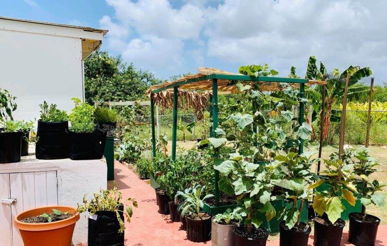 Home Gardens Have Bloomed Thanks to COVID-19