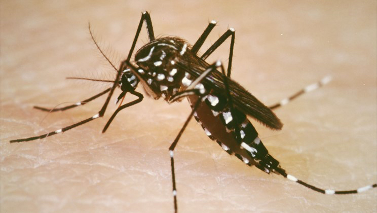 Territorial Epidemiologist Reminds Community to Stay Vigilant Against Mosquito-Borne Diseases