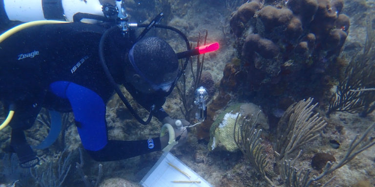 Youth Ocean Explorers Help Combat Coral Disease