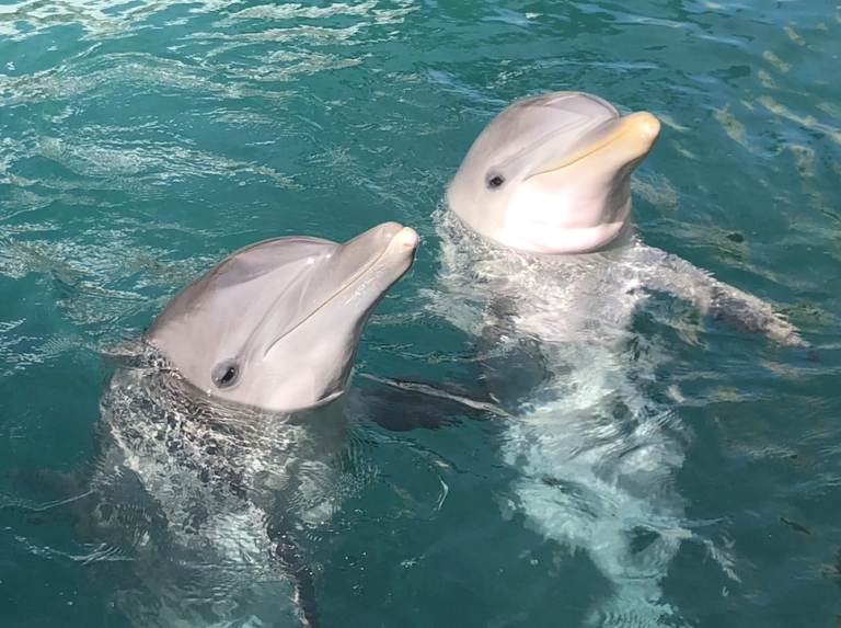 Coral World Ocean Park Welcomes Two New Dolphins