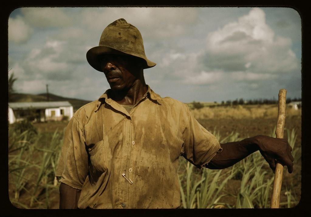 VI Corp farmer St. Croix