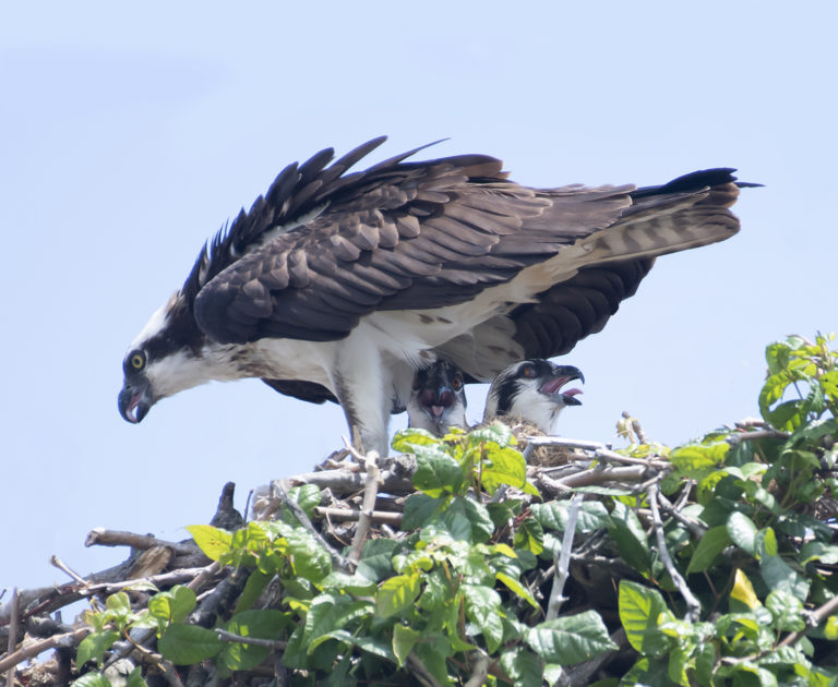 Many V.I. Winter Birds Are Summer Nesters in the U.S.