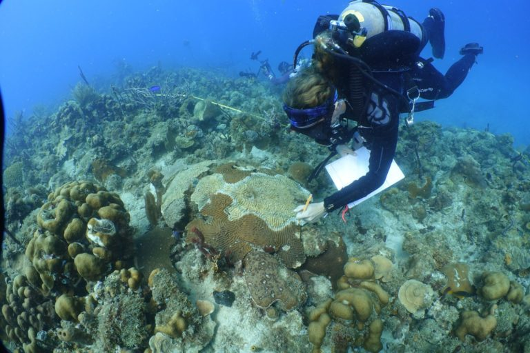 UVI Gets $2.5 Million to Study Stony Coral Tissue Loss Disease